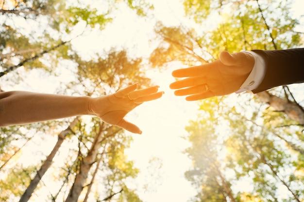 Ręce nowożeńców sięgają do siebie po parku lub lesie. Premium Zdjęcia