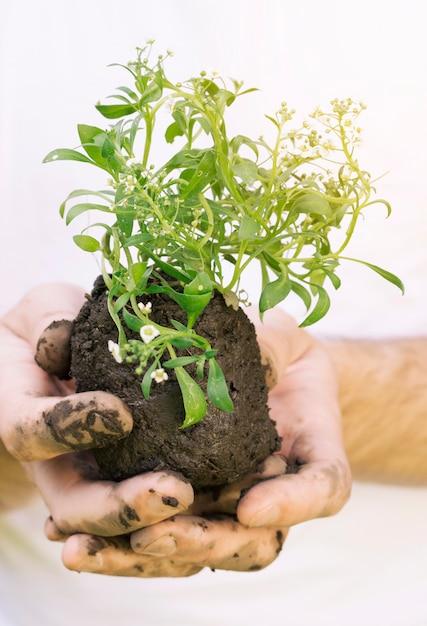Ręce Z Mokrą Glebą I Rośliną Premium Zdjęcia