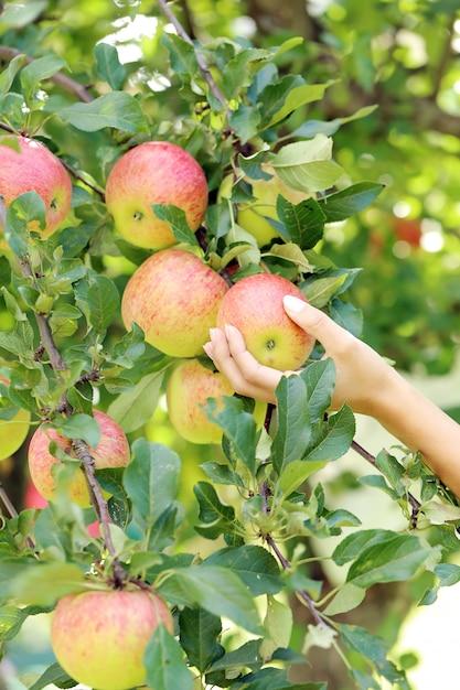 Ręka i jabłko Darmowe Zdjęcia