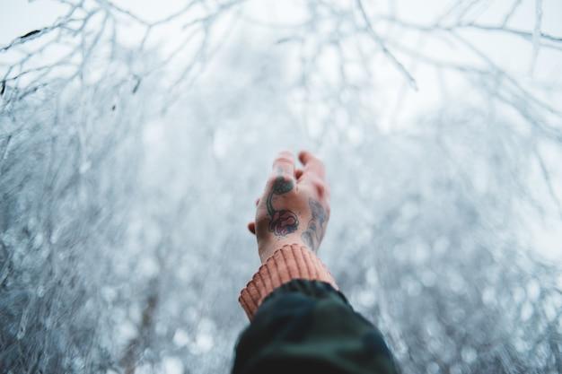 Ręka Osoby Wskazuje Na Ośnieżone Drzewo Darmowe Zdjęcia