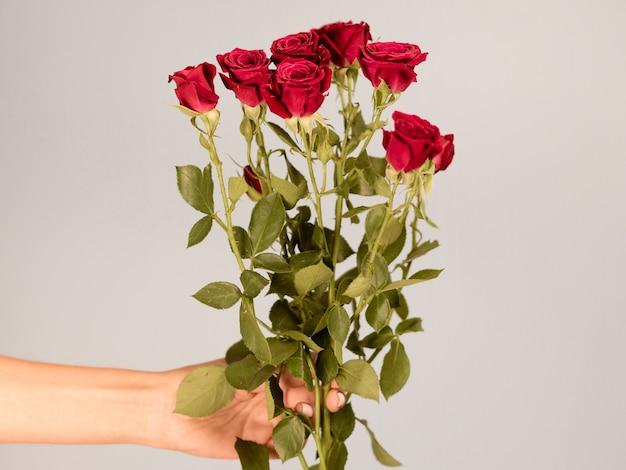 Ręka Trzyma Bukiet Róż Widok Z Przodu Darmowe Zdjęcia