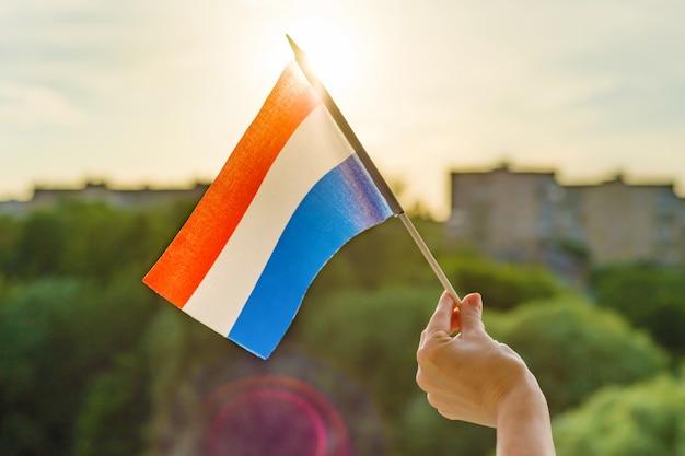 Ręka Trzyma Flagę Holandii Otwarte Okno Premium Zdjęcia