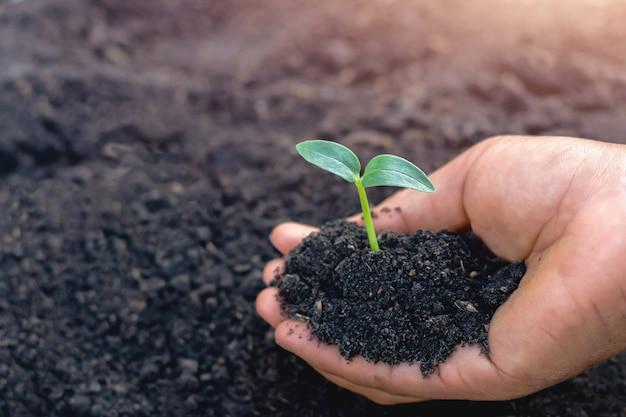 Ręka Trzyma Małego Drzewa Dla Zasadzać W Ogródzie Premium Zdjęcia
