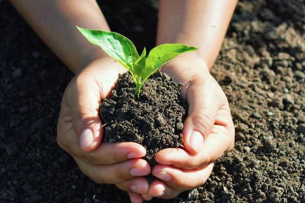 Ręka trzyma młode drzewo do sadzenia. Premium Zdjęcia