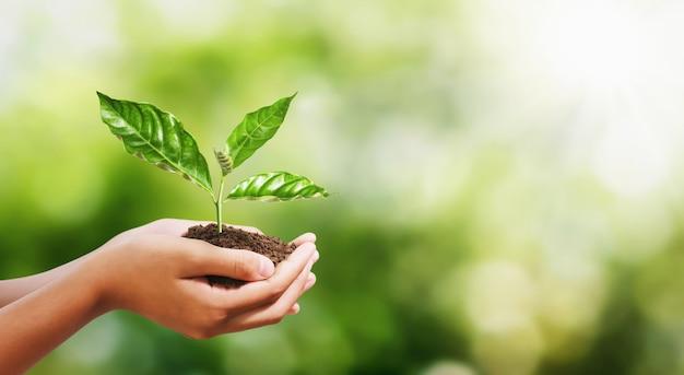 Ręka trzyma młodej rośliny na plamy zieleni natury tle. eko dzień ziemi Premium Zdjęcia