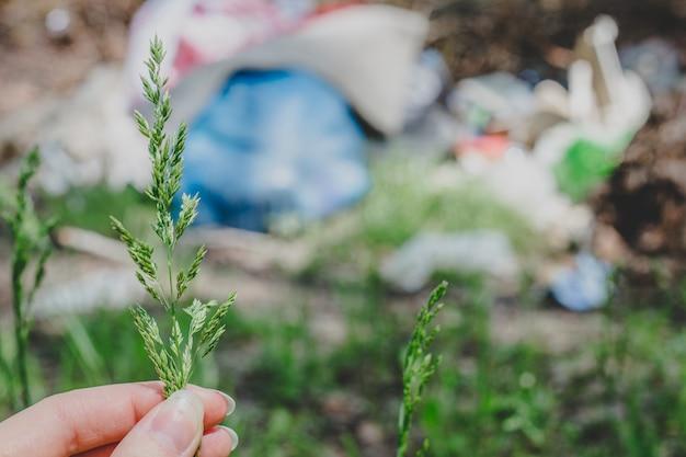 Ręka Trzyma Trawę, Zielony Kłosek, Roślina Na Tle śmieci W Lesie Premium Zdjęcia