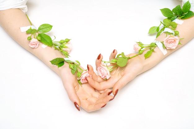 Ręka W Rękę Różowa Róża Pączkuje Na Rękach, Na Białym Tle, Izolator, Ręki Skóry Opieki Pojęcie. Premium Zdjęcia