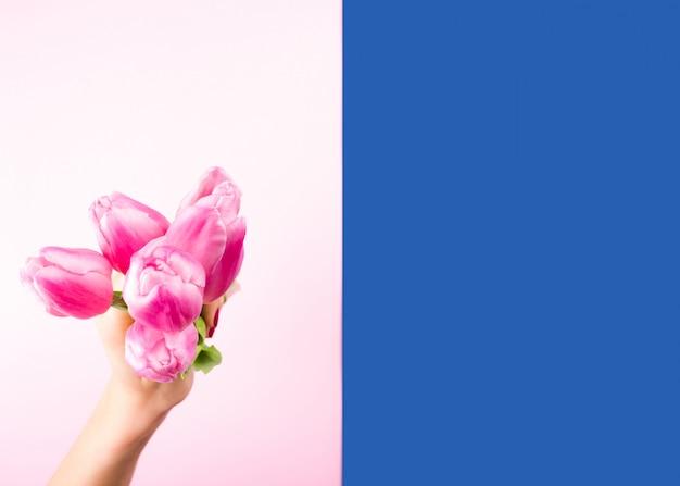 Ręka Z Tulipany Na Różowym I Niebieskim Tle Premium Zdjęcia