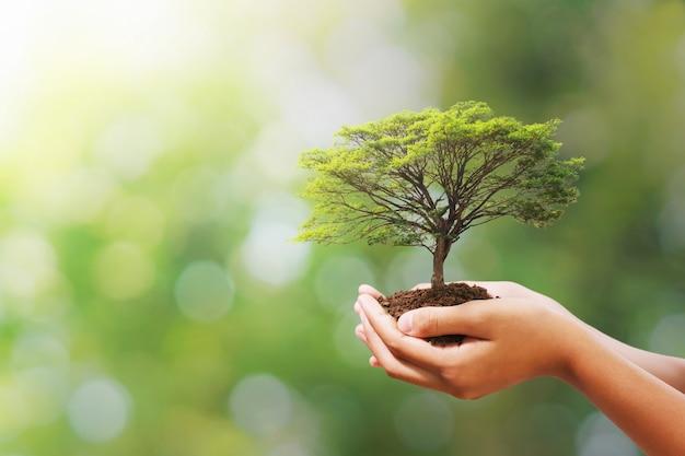 Ręki mienia drzewo na plamy zieleni naturze. eko dzień ziemi Premium Zdjęcia