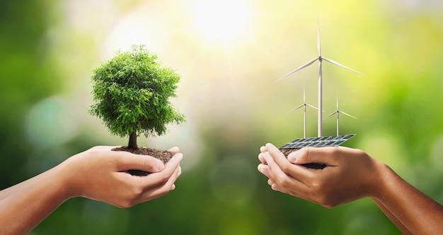Ręki Mienia Drzewo Z Turbiną I Panelem Słonecznym. Premium Zdjęcia