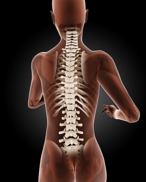 Renderuj 3d Kobiet Medycznych Szkielet Z Bliska Na Odwrocie Darmowe Zdjęcia
