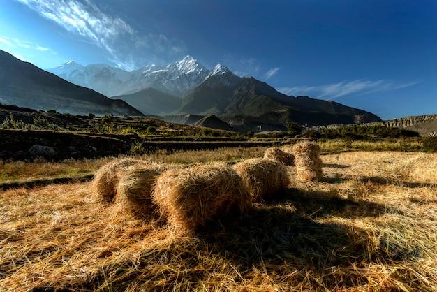 Rice Gospodarstwo Rolne W Muktinath Wiosce, Annapurna Obwód, Himalaje, Nepal Premium Zdjęcia