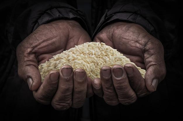 Rice W Rękach Rolnik, Mlejący Ryż Na Osoby Ręce Starej Premium Zdjęcia
