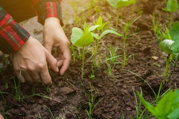 Rolnictwo Uprawia Ogród Warzywny. Premium Zdjęcia