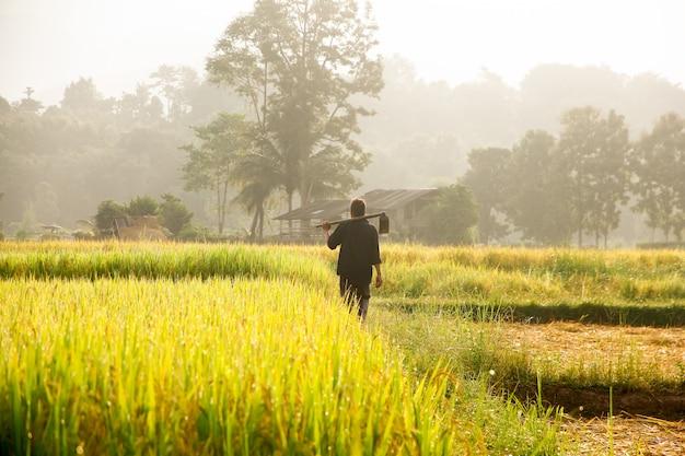 Rolnicy Niosący Pik Na Polu. Premium Zdjęcia