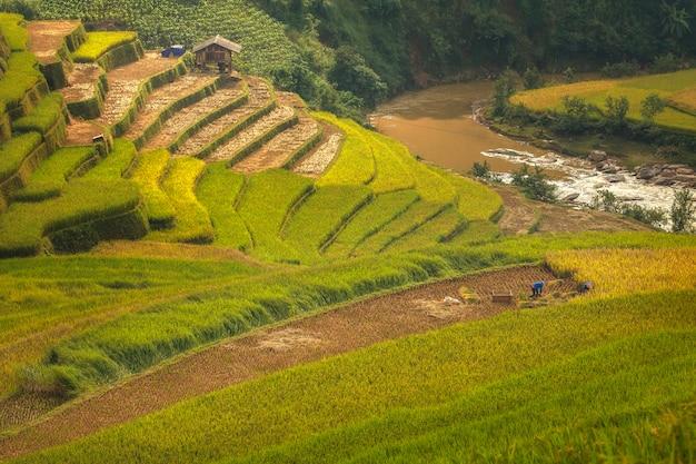 Rolnicy Pracują Na Tarasach Ryżowych. Premium Zdjęcia
