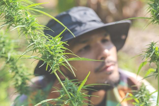 Rolnicy trzymają drzewa marihuany (marihuany) w swoich gospodarstwach. Darmowe Zdjęcia