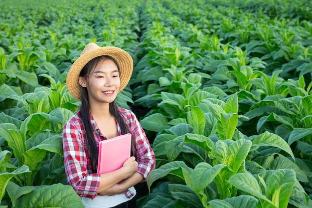 Rolnicy trzymają notatnik sprawdzają nowożytnych tabacznych pola. Darmowe Zdjęcia