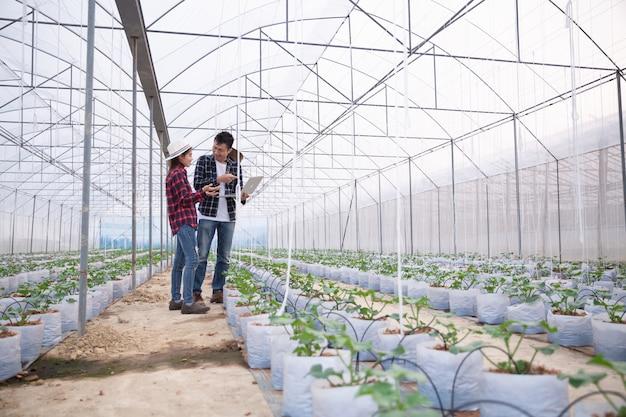 Rolniczy badacz z tabletką powoli sprawdza rośliny. Darmowe Zdjęcia