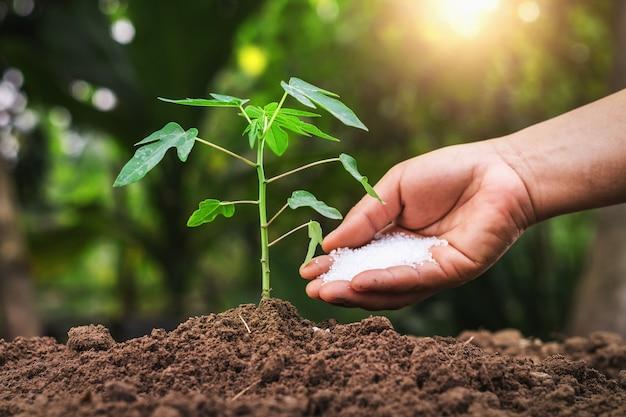 Rolnik Daje Użyźniaczemu Młodemu Drzewu W Ogródzie Premium Zdjęcia