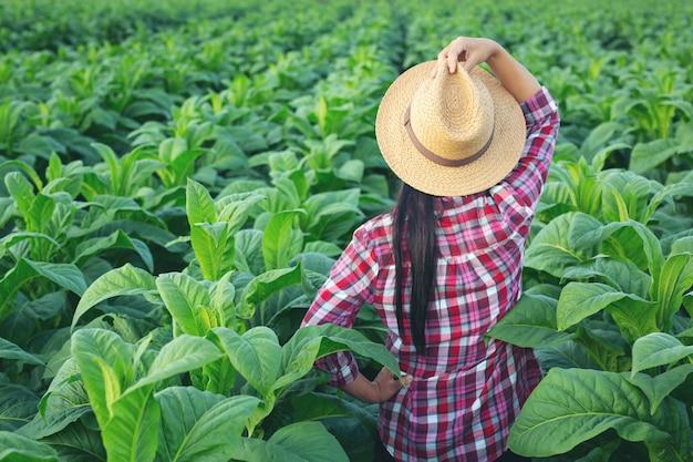 Rolnik kobieta wygląda tytoń w polu. Darmowe Zdjęcia