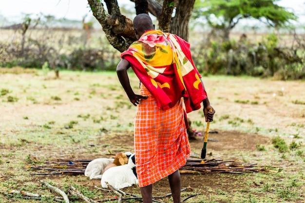 Rolnik Massai Sprawdza Kozy Premium Zdjęcia
