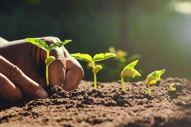 Rolnik Ręcznie Sadzenie Fasoli W Ogrodzie Premium Zdjęcia