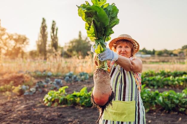 Rolnik wyciągnął buraki z ziemi i trzymał je. zbieranie warzyw. Premium Zdjęcia