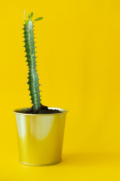 Roślina doniczkowa Premium Zdjęcia