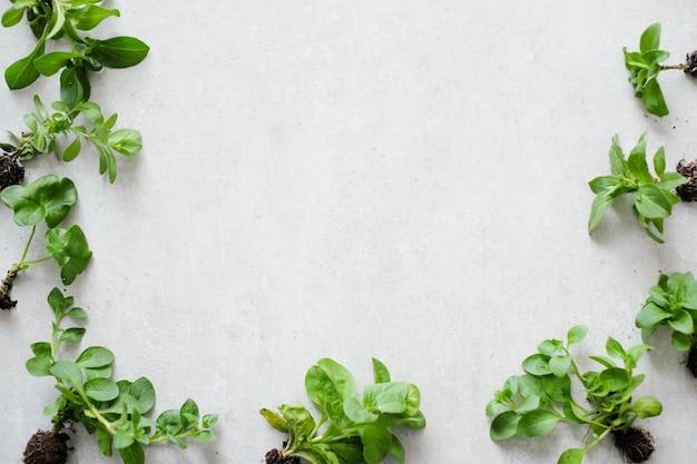 Roślina. Roślina Doniczkowa Na Stole Darmowe Zdjęcia