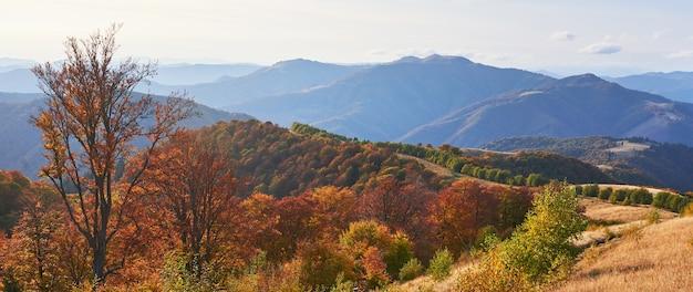 Roślinność Góralska Skromna Latem I Niezwykle Piękne Kolory Kwitnie Jesienią Premium Zdjęcia