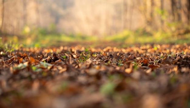 Roślinność Roślin W Parku Darmowe Zdjęcia
