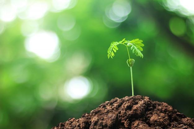 Rosnące drzewa z nasion uprawianych w ziemi na naturalnym tle Premium Zdjęcia