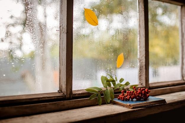 Rowan gałąź na wioski drewnianym mokrym okno, kopii przestrzeń. Premium Zdjęcia