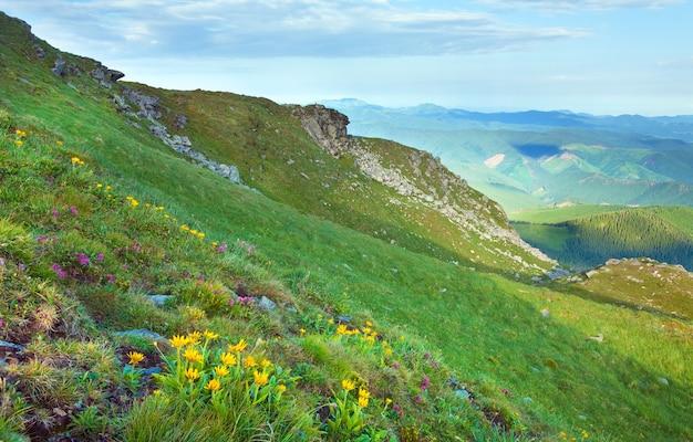 Różanecznik Różowy I żółte Kwiaty Na Letnim Zboczu Góry (ukraina, Karpaty) Premium Zdjęcia