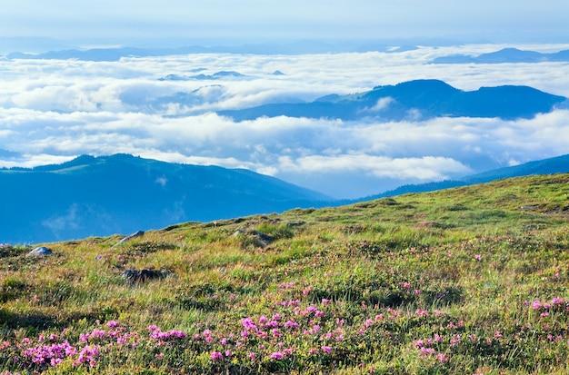 Różanecznik Różowy Kwiaty Na Letnim żałobnym Zboczu Góry (ukraina, Karpaty) Premium Zdjęcia