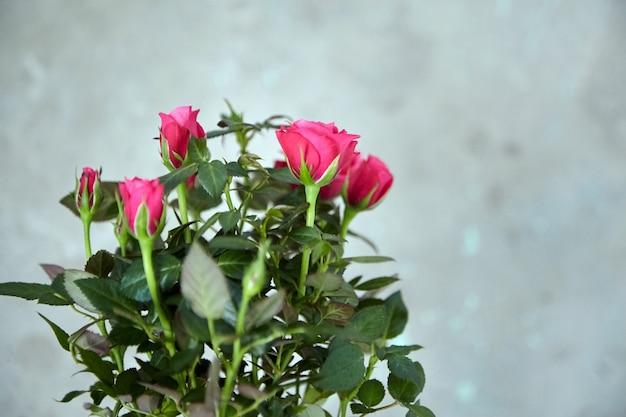 Róże Na Tle Niewyraźne Betonowe ściany. Roślina Doniczkowa, Kwiaty W Pomieszczeniach, Nieostrość Premium Zdjęcia