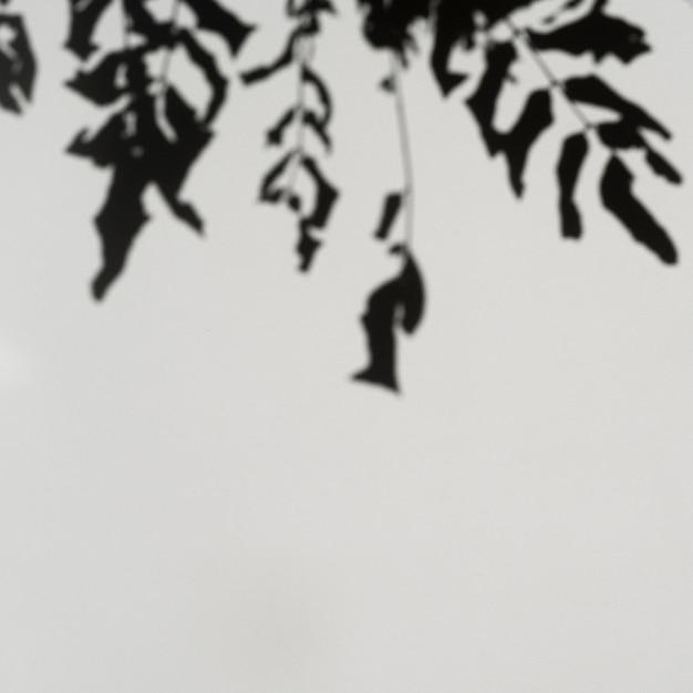 Rozgałęzia się cienie na jasnoszarym tle Darmowe Zdjęcia