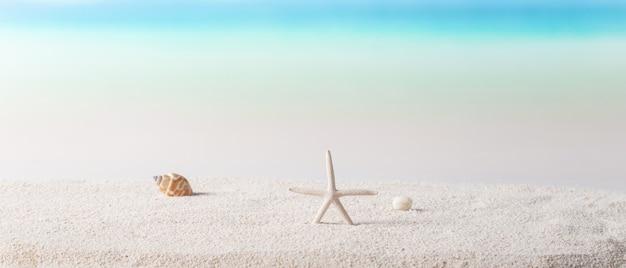 Rozgwiazda I Muszla Na Słonecznej Plaży Premium Zdjęcia