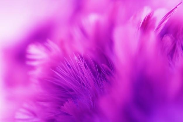 Rozmyj Różowe Ptasie Pióra Premium Zdjęcia