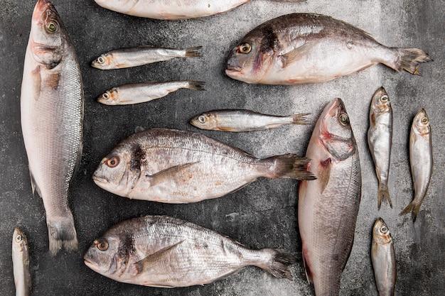 Różne Srebrne Ryby Z Owoców Morza Darmowe Zdjęcia