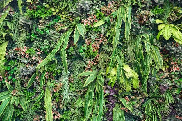 Różnorodność zieleni liście z roślinami dekoracyjnymi na ścianie Premium Zdjęcia