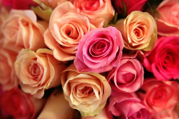 Różowe i żółte róże zbliżenie Premium Zdjęcia