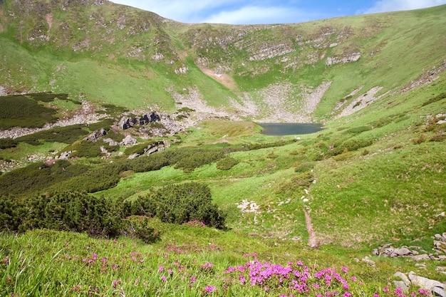 Różowe Kwiaty Rododendronów I Alpejskie Jezioro Brebeneckul W Letnim Wąwozie Górskim (ukraina, Karpaty) Premium Zdjęcia