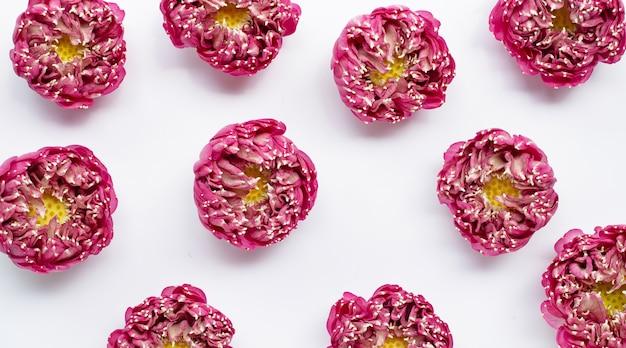 Różowy Kwiat Lotosu Na Białym Na Białym Tle. Widok Z Góry Premium Zdjęcia