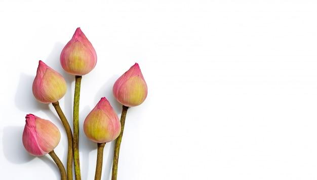 Różowy Kwiat Lotosu Na Białym Tle. Widok Z Góry Z Miejscem Na Kopię Premium Zdjęcia