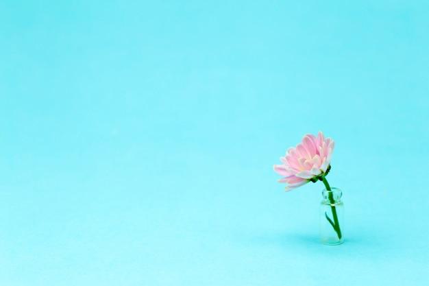 Różowy Kwiat Na Kolorowym Minimalnym Tle. Kreatywne Tło Kwiatowy. Skopiuj Miejsce Premium Zdjęcia