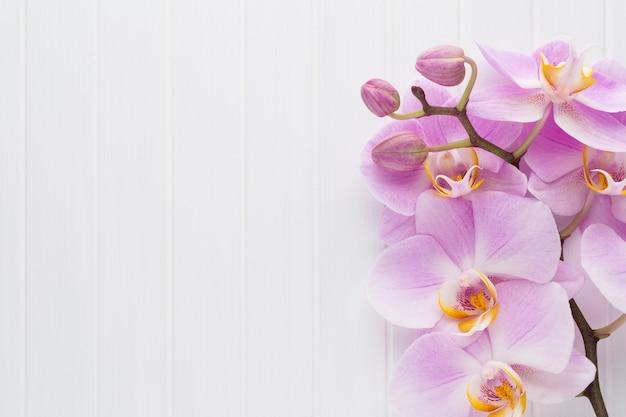 Różowy Kwiat Orchidei Na Białym Tle Drewna Teksturowanej, Miejsce Na Tekst. Premium Zdjęcia