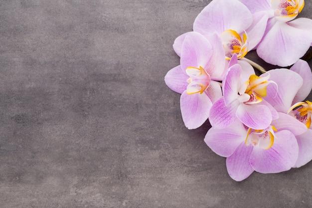 Różowy Kwiat Orchidei Na Szarym Tle Z Teksturą, Miejsce Na Tekst. Premium Zdjęcia
