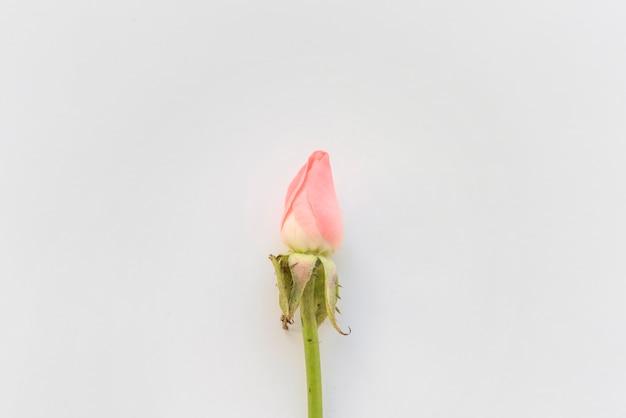 Różowy Kwiat Róży Na Stole Darmowe Zdjęcia